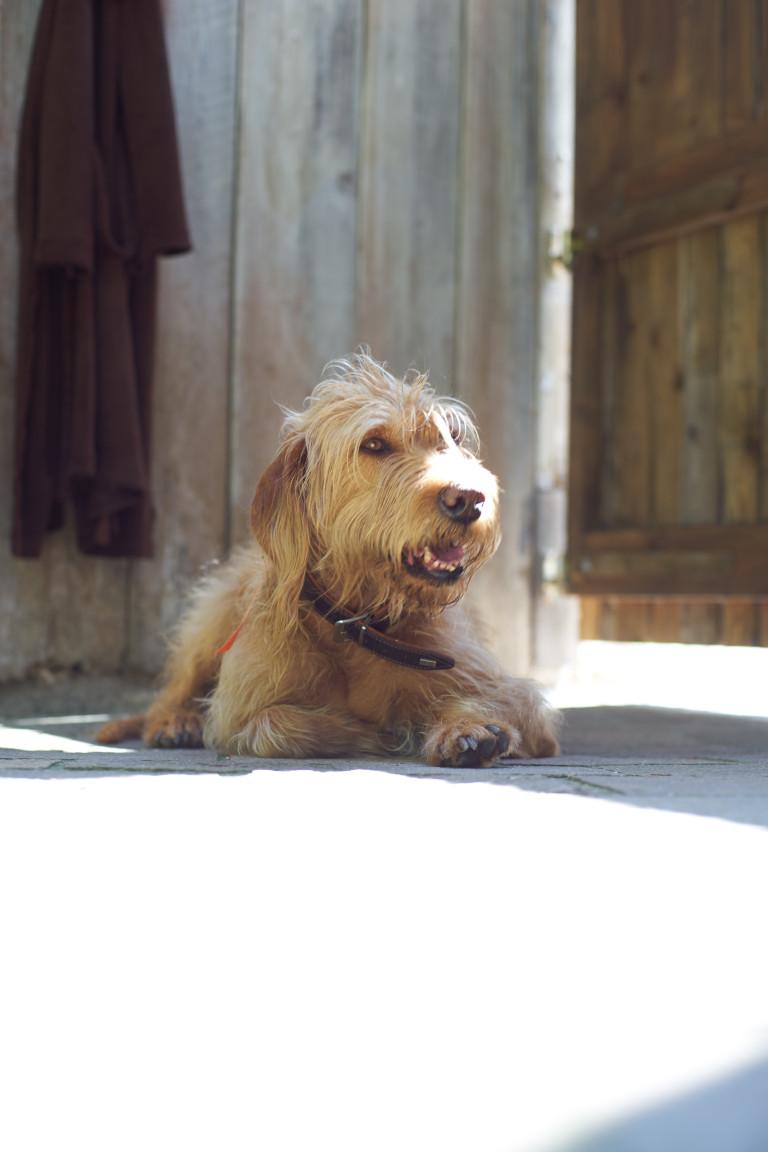 Hund entspannt im Schatten auf der Terrasse des Dorfbad Tannermühl