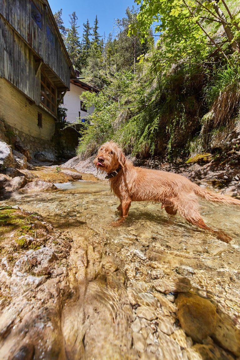 Hund im Wasser vorm Dorfbad Tannermühl